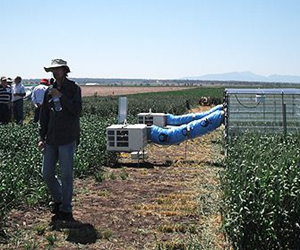 An international research team is hoping to develop crops capable of withstanding heatwaves.