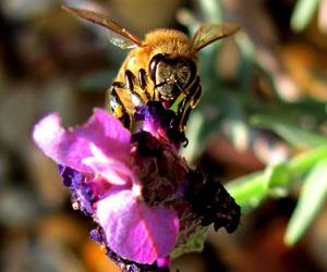 The health of bees is under threat, and our food could be at stake.