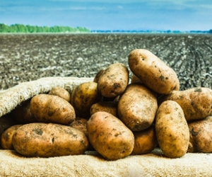A wide range of potato production issues will be discussed.
