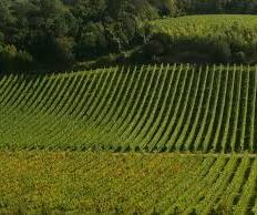 Tools and support exist for wineries willing to improve energy efficiency in their operations.