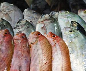Australians are being kept in the dark about where their seafood comes from.