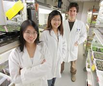 Gonzalo Estavillo (rear) with fellow researchers in the plant growth room. Photo by Tim Wetherell.
