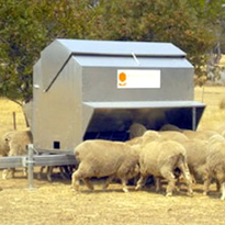 Sheep Feed - Sheep Feeder